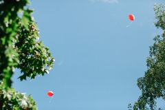 Two red balloons against a clean blue sky framed by branches of trees with green foliage. There is a place for text stock photography