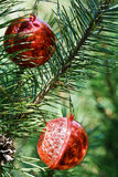 Two red balls on christmas tree Stock Images