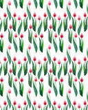 Two red beautiful bright tulips on a white background seamless pattern watercolor hand sketch Stock Images