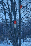 Two red birdhouse hanging in tree. Two red birdhouse hanging in a tree Stock Image