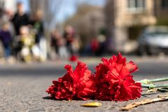 Red carnations on the road stock photography
