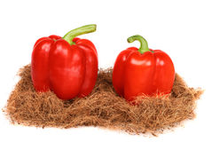 Two red bulgarian peppers Stock Image