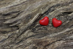 Two red candy hearts on tree Stock Image