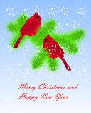 Two red cardinals sitting on green fir branches, white snow, on blue. Two red cardinals sitting on green fir branches, white snow, on blue, Happy New Year and Stock Photography
