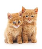 Two red cats. Two red cats on a white background Royalty Free Stock Images