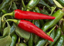 Two red cayenne peppers Royalty Free Stock Images