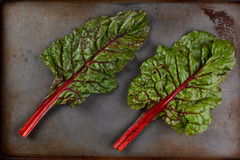 Two Red Chard Stalks Royalty Free Stock Photo