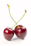 Two red cherries Royalty Free Stock Photography