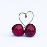 Two red cherries. Two morello red cherries with a heart shaped stalk on a white background Royalty Free Stock Photos