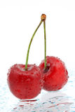 Two red cherries a over white background Stock Photos