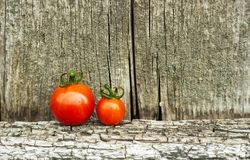 Red cherry tomatoes on old shabby rustic background, copy space. Two red cherry tomatoes staying in line in front of old shabby rustic wooden wall, copy space stock photos