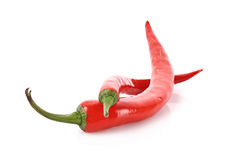 Two red chilly pepper isolated Royalty Free Stock Photos