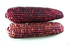Two red corn Royalty Free Stock Photography