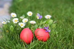 Two red Easter eggs and flowers Royalty Free Stock Photo