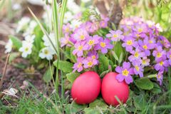 Two red Easter eggs in a garden Stock Photography