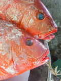 Two red fishes Stock Photo