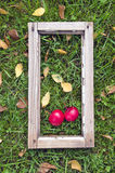 Two red fresh apple in ancient window frame on garden grass Royalty Free Stock Image
