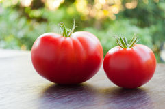 Two red fresh tomatoes Royalty Free Stock Image