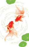 Two red golden fish on white background  vertical Stock Images