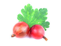 Two Red gooseberry fruit isolated on white Royalty Free Stock Images