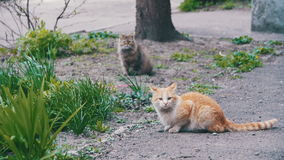 Two Red and Gray Homeless Cats on the Street in the Park. Slow Motion stock video footage