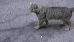 Two Red and Gray Homeless Cats on the Street in the Park. Slow Motion in 96 fps. Two Stray gray, and red cats sitting on. The ground in the City Street stock video footage