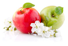 Two red and green apples with leaves and flowers Stock Images