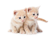 Two red-haired kittens. Stock Images