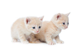 Two red-haired kittens. Stock Image
