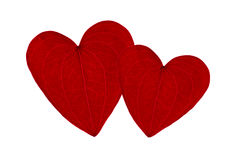 Two red heart shaped leaves. Together on a white background Royalty Free Stock Image