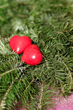 Two red hearts on background of fir branches. Valentine Day Royalty Free Stock Image
