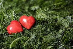 Two red hearts on background of fir branches. Valentine Day Stock Image