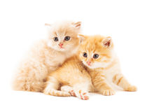 Two red kittens Royalty Free Stock Images