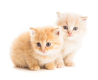 Two red kittens Royalty Free Stock Photo