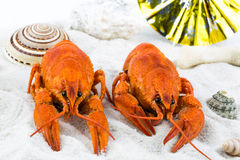 Two red lobsters on a sandy beach Stock Images
