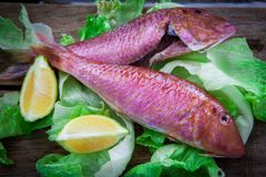 Red mullet fish style. Two red mullet with chili pepper and soja sauce on plate with chopstick Royalty Free Stock Image