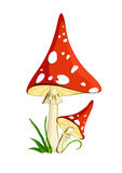 Two red mushrooms Royalty Free Stock Photos