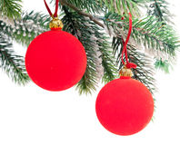 Two Red New Year's ball on a green New Year's fir-tree.Still-life on a white background Royalty Free Stock Photo