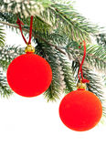 Two Red New Year's ball on a green New Year's fir-tree on a white background Royalty Free Stock Images