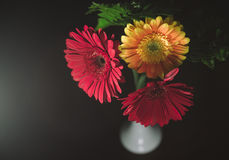 Two Red One Yellow Flower Royalty Free Stock Photo