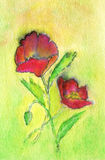 Two Red Poppies. A watercolor painting of two poppies Royalty Free Stock Photography