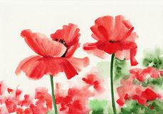 Two red poppies Royalty Free Stock Images