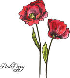 Two red poppy flowers Stock Photography