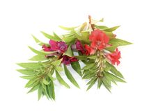 Two red and purple Balsam Royalty Free Stock Photo