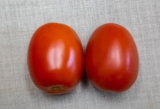 Two red Roma tomatoes. Nutritious. Great source of vitamin A and C and lycopene. It is fleshy, Plump and good for canning and making tomato paste Stock Photos