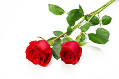 Two red roses. With stem on white background Royalty Free Stock Photo