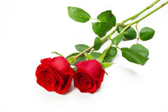 Two red roses. With stem on white background Royalty Free Stock Images