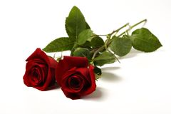 Two red roses. On a white surface Royalty Free Stock Image