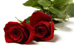 Two red roses 2 Royalty Free Stock Photography