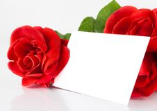 Two red roses and blank gift card for text on white background Royalty Free Stock Image